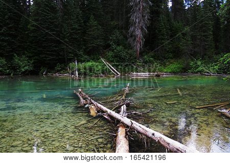A crystal clear river surrounded with nature near the Emerald Lake in Banff National Park.  Banff, Alberta, Canada.