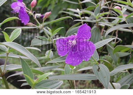 purple flower with dew background,green background,nature background
