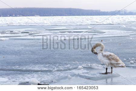 Frozen Danube River In Belgrade, Serbia
