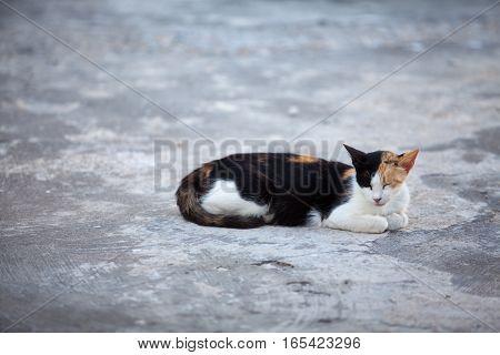 Homeless cat resting on the street. Oia village Santorini island Greece