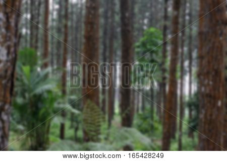 Blurred pine forest background,Blurred forest background,Blurred green background,Blurred brown background,Blurred tree background