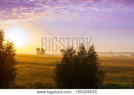 Misty dawn on early summer morning in village. Fresh morning air and fog creeps over field and pasture low sun breaks through trees branch