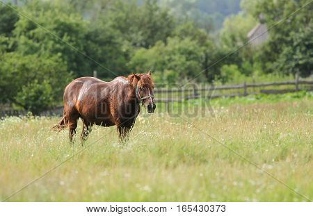 One Horse Standing In A Field With Flowers