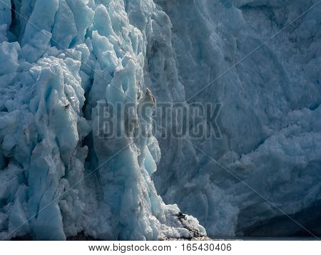 Factured blocks of ice make up the vertical face of a tidewater glacer.