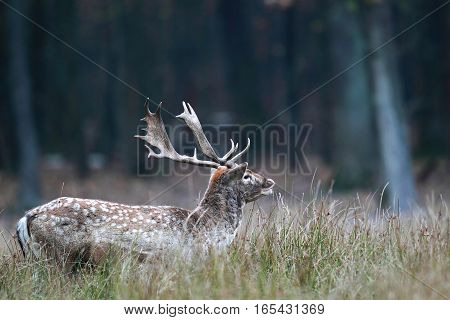 Portrait Of A Male Wild Deer Near A Forest In Autumn