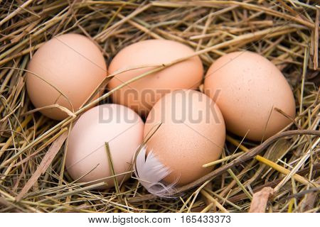 Five chicken eggs lying in the hay.