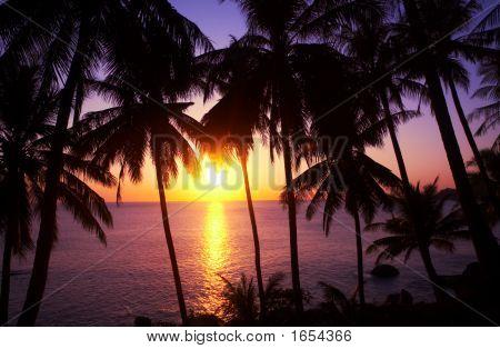 Sundown And Palms