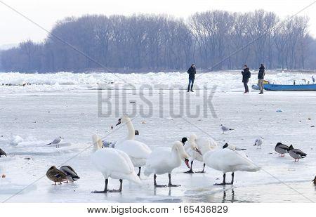 Belgrade, Serbia. January 16Th 2017: People Walk On The Frozen Danube River In Belgrade, Serbia