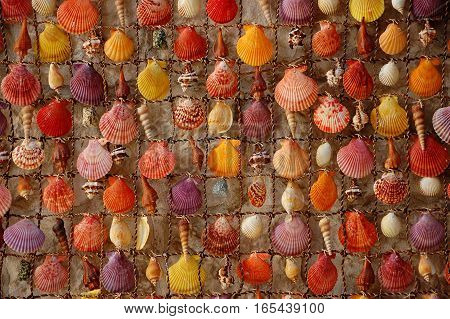 Shells in the net. Colorful and different like people are