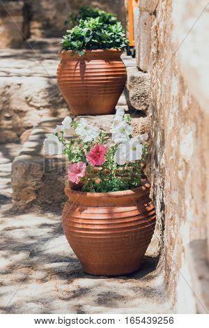 Flowers In The Pot In The Garden