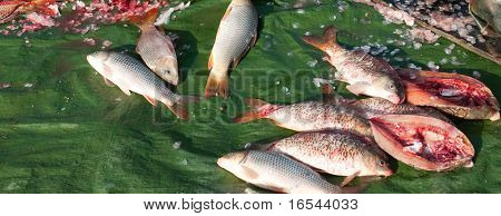 Fish at market for sale in china. poster