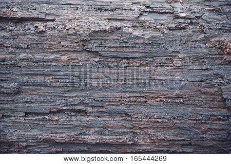 texture of petrified wood. old wood background