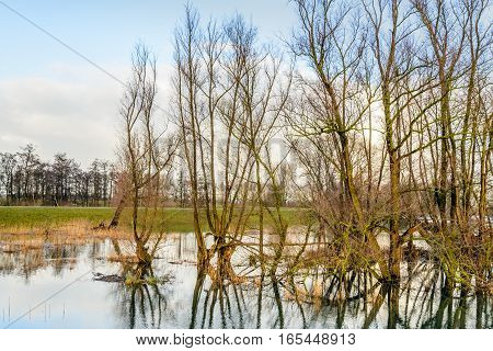Backlit image of bare tree branches reflected in the mirror smooth water surface of a flooded Dutch polder on a cloudy say in the winter season.