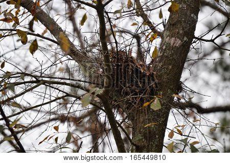 horizontal bird nest fall winter leaves blue sky