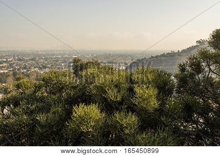 Los Angeles Cityscape W8A0331