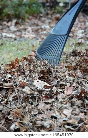 rake and leaves backyard chores fall winter leaves