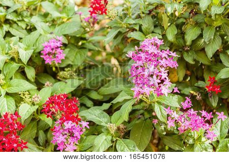Purple And Red Flowers 8152