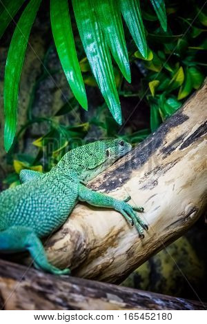 Small green lizard on a tree log in a zoo
