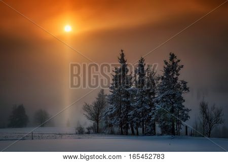 Snowy trees in sunset orange light at Lapszanka hills Poland