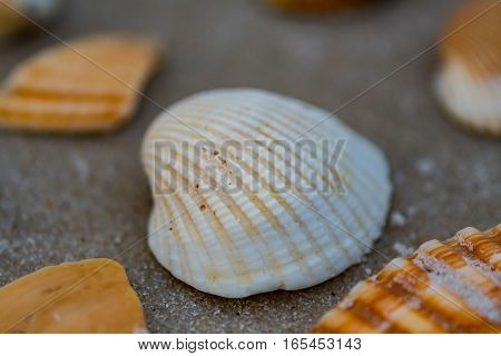 Grains of Sand on White Shell surrounded by other shells on beach