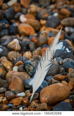 White feather on peebles on the stony beach on English coast
