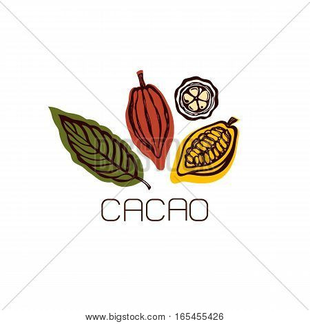 Cocoa fruit and leaves. Label. Hand drawn. Vector illustration.