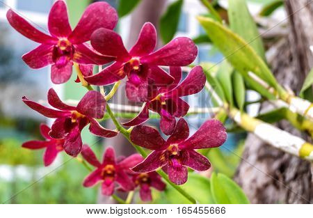 The red orchid flowers in the garden