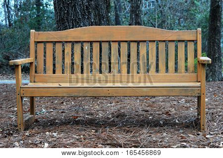 wooden park bench on pine straw trees in background