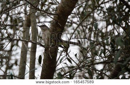 camouflage bird winter tree overcast weather gray sky