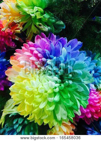 Beautiful Multicolor of real flower with yellow blue green red