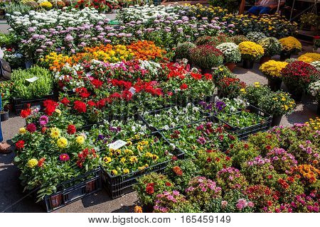 Many flowers in market at Bucharest Romania.