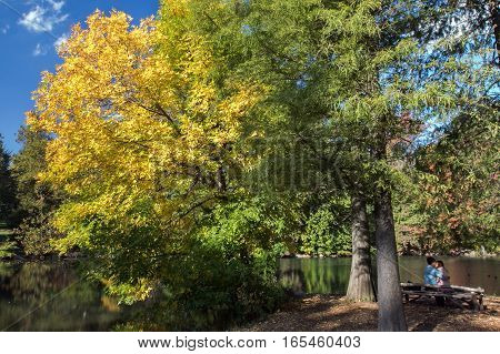 Autumn tree with yellow and green leaves.