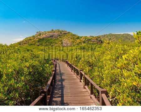 mangrove forest with wooden bridge mountain and blue sky background