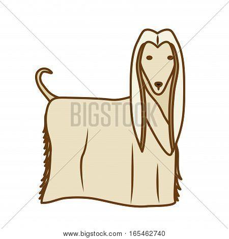 afghan hound dog icon over white background. colorful design. vector illustration