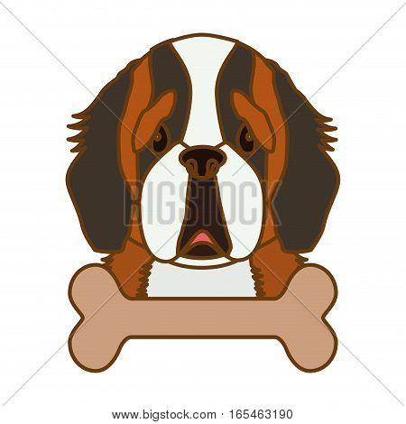 st bernard dog icon over white background. colorful design. vector illustration