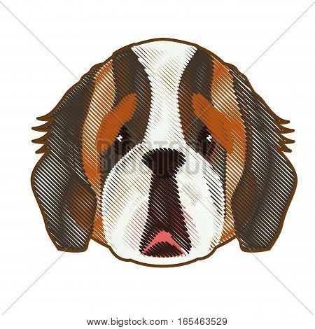 saint bernard dog face icon over white background. colorful design. vector illustration