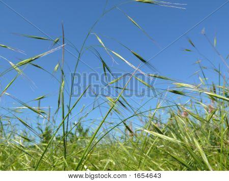 Green, Juicy Grass