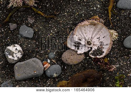 sea urchins, shells and seaweed on the shore, close-up photo