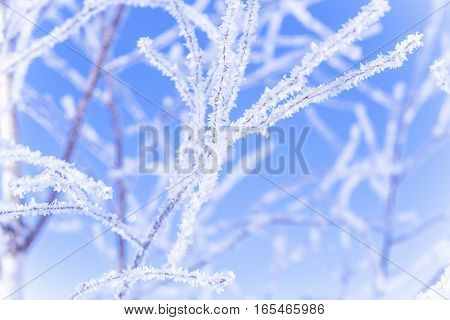 frozen tree branches on the sky background in the winter forest