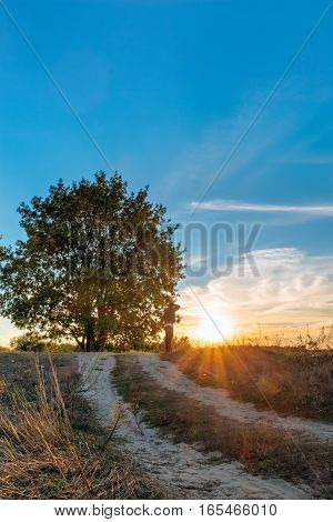 Sunset Landscape With Tree And Oak Man Under Him
