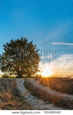 Beautiful Picturesque Oak Tree On Sunset Background