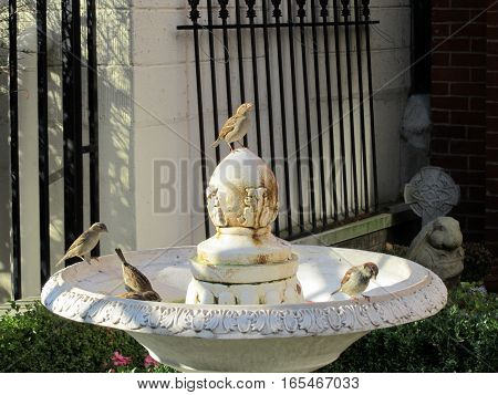 flock of house sparrows perched on a fountain