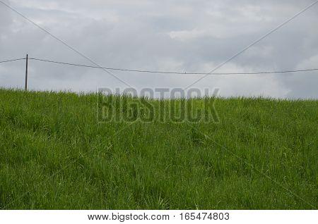 Field Grass Sugar Cane Old Electric Pole