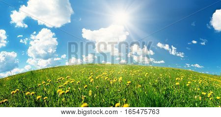 Green field with yellow dandelions and blue sky. Flowers on grassland in beautiful sunny weather with fluffy clouds