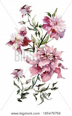 Expanded pink peonies on white background. Watercolor painting. Hand drown. Vertical orientation.