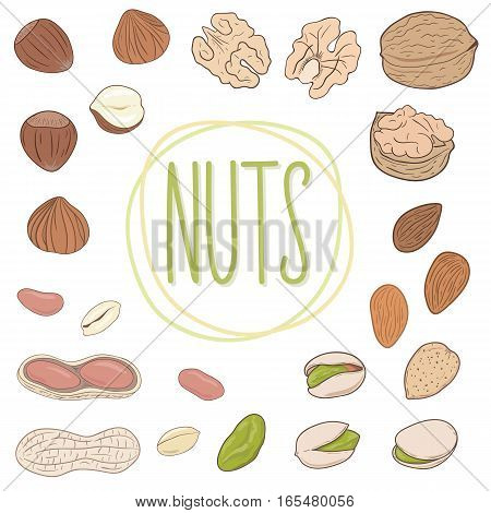 Nut collection. Set of walnuts, almonds, pistachios, peanuts, hazelnuts, whole and shelled. Mix of different nuts. Vector hand drawn illustration.