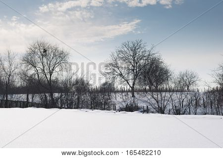 winter landscape with fresh snow and trees silhouette
