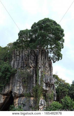 Suan Hin Pha Ngam or Thailand's Kunming A limestone garden in Loei Thailand