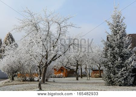 Garden with fruit trees in idyllic hoarfrost
