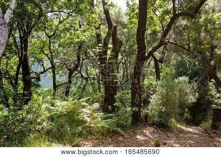 Tropical forest in the mountains on Madeira island . Portugal